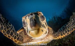 selfie :-) by Steven Miller