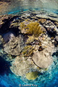Red Sea reefscape by Leena Roy