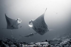 The manta dance by Marteyne Van Well
