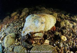 Capture by Salvatore Ianniello