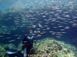 Scuba inside a school of fish by Lucio Valgimigli