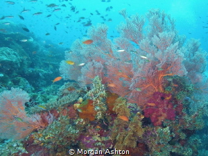 Soft Coral in Raja Ampat by Morgan Ashton