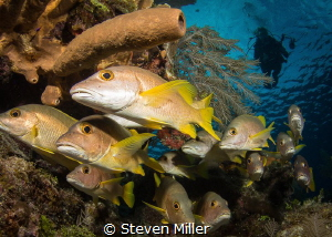 drifting through a school of grunts by Steven Miller
