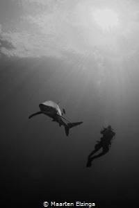 Shark dive @ Pico, Açores by Maarten Elzinga