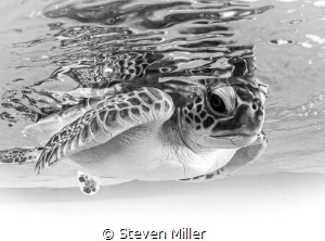 B&W LR plug in applied to Hatchling by Steven Miller