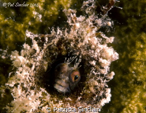 While doing a shore dive with Nina Baxa, she pointed out ... by Patricia Sinclair