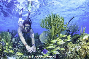 """""""Dropping In""""  Snorkeler explores a vibrant reef in the ... by Chase Darnell"""