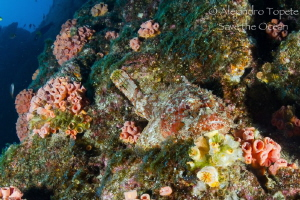 Stone Fish in the reef by Alejandro Topete