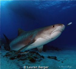 """Elegant Predator""