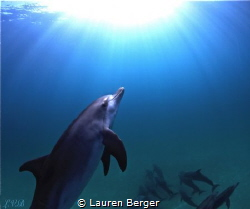 """""""The Epiphany""""  While freediving in the Bahamas, we came... by Lauren Berger"""