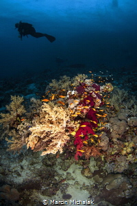 Postcard from the Red Sea by Marcin Michalak