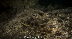 Crocco by Anthony Smith