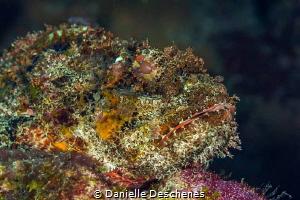 Stone fish by Danielle Deschenes