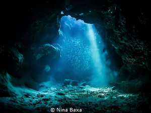 Silver Suspense ~ Silversides seeking refuge – Grand Caym... by Nina Baxa