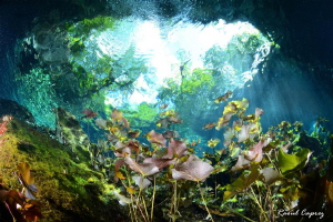 Cenote way out by Raoul Caprez