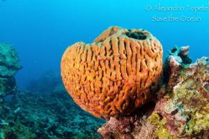 Heart Coral, Veracruz Mexico by Alejandro Topete