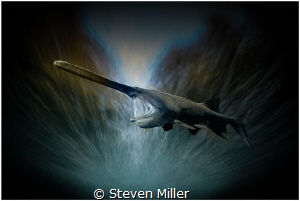 Paddlefish #2 with 4 second shutter composite by Steven Miller