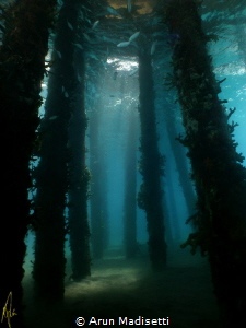Light filtering through the pilings (SeaLife DC1400) by Arun Madisetti