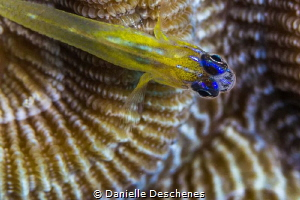 Protecting his home by Danielle Deschenes