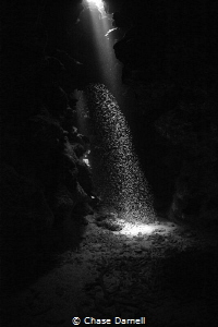 """""""Waterfall""""  Silversides dancing in the sun.  ISO 3200 ... by Chase Darnell"""