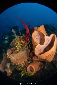 North Wall Reef Scene, Grand Cayman by Susannah H. Snowden