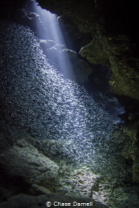 """Illuminate"" 