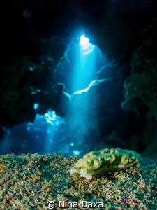 Grotto Elysia ~ Elysia crispate, Lettuce Sea Slug – Eden ... by Nina Baxa