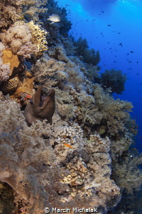 Red Sea Reef - D70,2xDS125 by Marcin Michalak