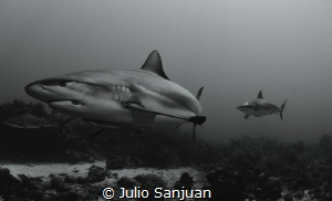 sharks in cara a cara dive site by Julio Sanjuan