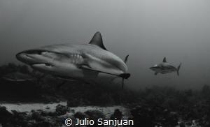 sharks in cara a cara dive site by Julio Sanjuan