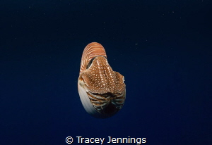 Sometimes underwater is like being in an alien world. Par... by Tracey Jennings