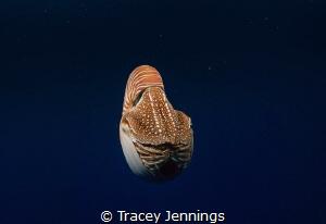 Sometimes underwater is like being in an alien world. Par... by Tracey Jennings