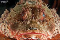 Big face... by Gaetano Gargiulo