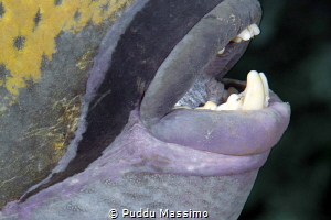 Teeth by Puddu Massimo