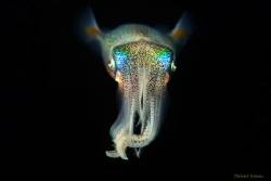 Squid by Bülent Kılınc