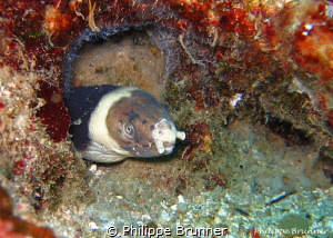 Moray by Philippe Brunner
