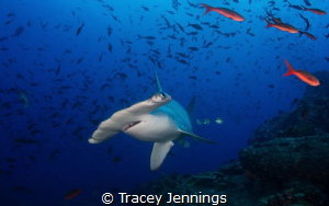 Cocos Surprise ... I was hiding behind a rock near a clea... by Tracey Jennings