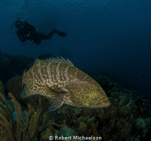 THe resident grouper at Capt Don's House Reef by Robert Michaelson