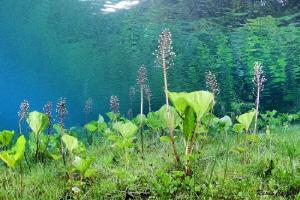 Meadow in water by Raoul Caprez