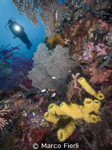 Corals and Diver by Marco Fierli