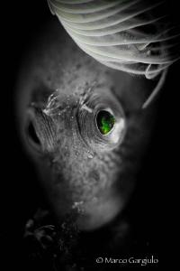 Green Eyes by Marco Gargiulo