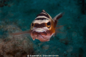 """""""Why So Grumpy?""""  When I first spotted this tobacco wra... by Susannah H. Snowden-Smith"""