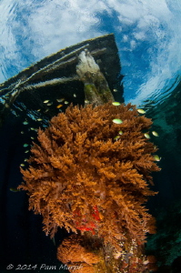 LIfe Under the Jetty.  Aborek Jetty, Raja Ampat, Indonesia by Pam Murph