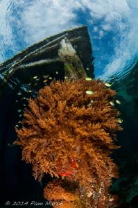 LIfe Under the Jetty.  Aborek Jetty, Raja Ampat, Indonesia by Pam Murph