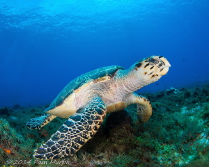 One of Eighteen.    During one week of diving in Cozumel ... by Pam Murph