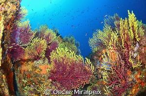mediterranean colors by Oscar Miralpeix