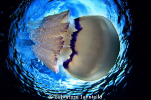 From below by Salvatore Ianniello