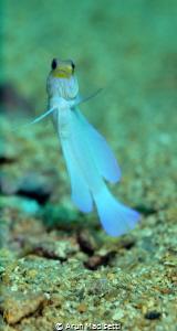 SeaLife DC1400, natural light. by Arun Madisetti