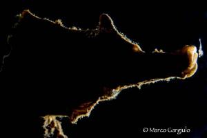 Hyppo in backlight by Marco Gargiulo