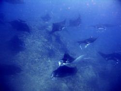 mantas in the mist. not a night dive, not kona, not even ... by Dylan Matheson